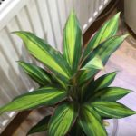 excotic plants