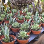 exotic tropical plants