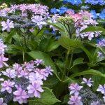 flowering plants for florida