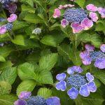 flowering plants for full sun