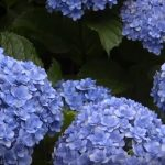 flowering plants for indoors