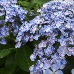 flowering plants for outdoor garden