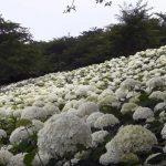flowering plants in texas