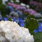 flowering plants pictures