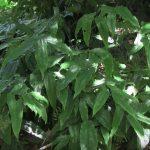ground cover perennials