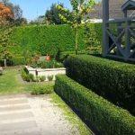 hedge shrubs