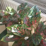 house exotic plants