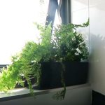 indoor plants for oxygen