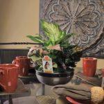indoor plants stand