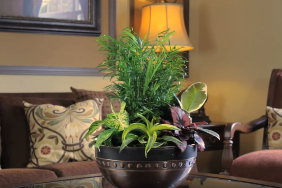 Low light houseplants author archives darxxidecom 100 for Indoor flowering plants low light
