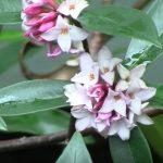 outdoor winter flowering plants