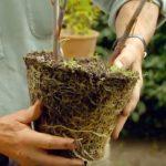 planting a garden box