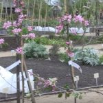 planting a garden dream