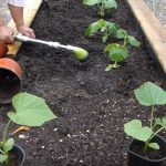 planting a garden for beginners