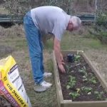 planting a garden in february