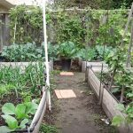 planting a garden layout