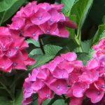 red flowering plants