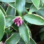 winter flowering plants bloom