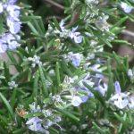 winter flowering plants garden