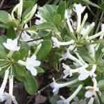 winter flowering plants in florida