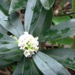 winter flowering plants in zone 7