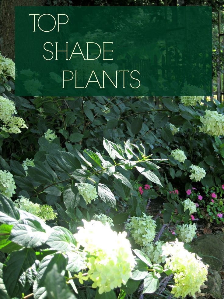 best plants for shade