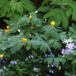flowering shrubs for shade