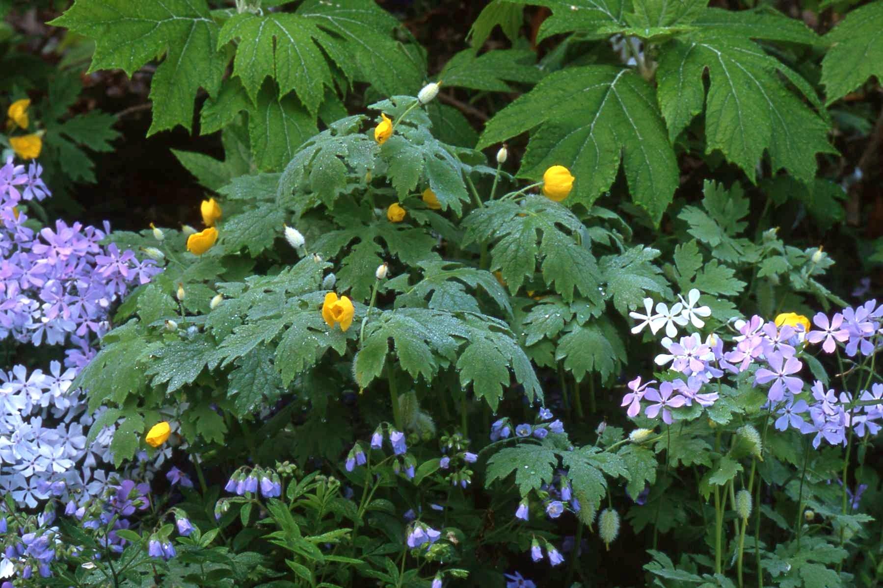 Flowering Shrubs For Shade Flowers Reviews