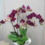 indoor orchids