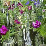 orchid feed