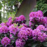shade loving flowers