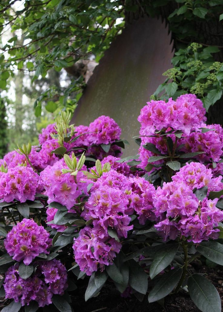 Shade loving flowers flowers reviews shade loving flowers mightylinksfo Gallery