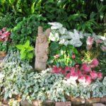 shrubs for shade