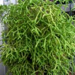 succulent plant care