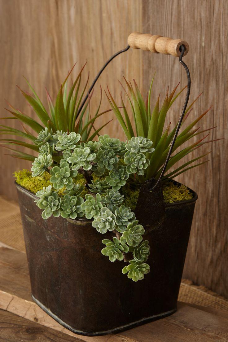 about succulents