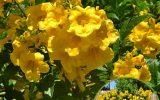 arizona-winter-flowers