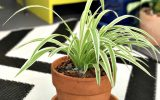 benefits-of-indoor-plants