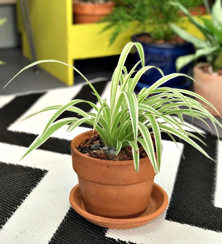 benefits of indoor plants