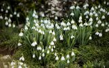blooming-winter-flowers