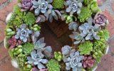 blue-succulent