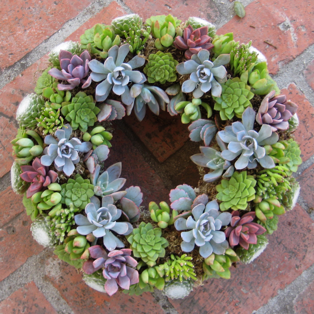 blue succulent