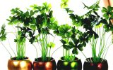 bonsai-house-plants