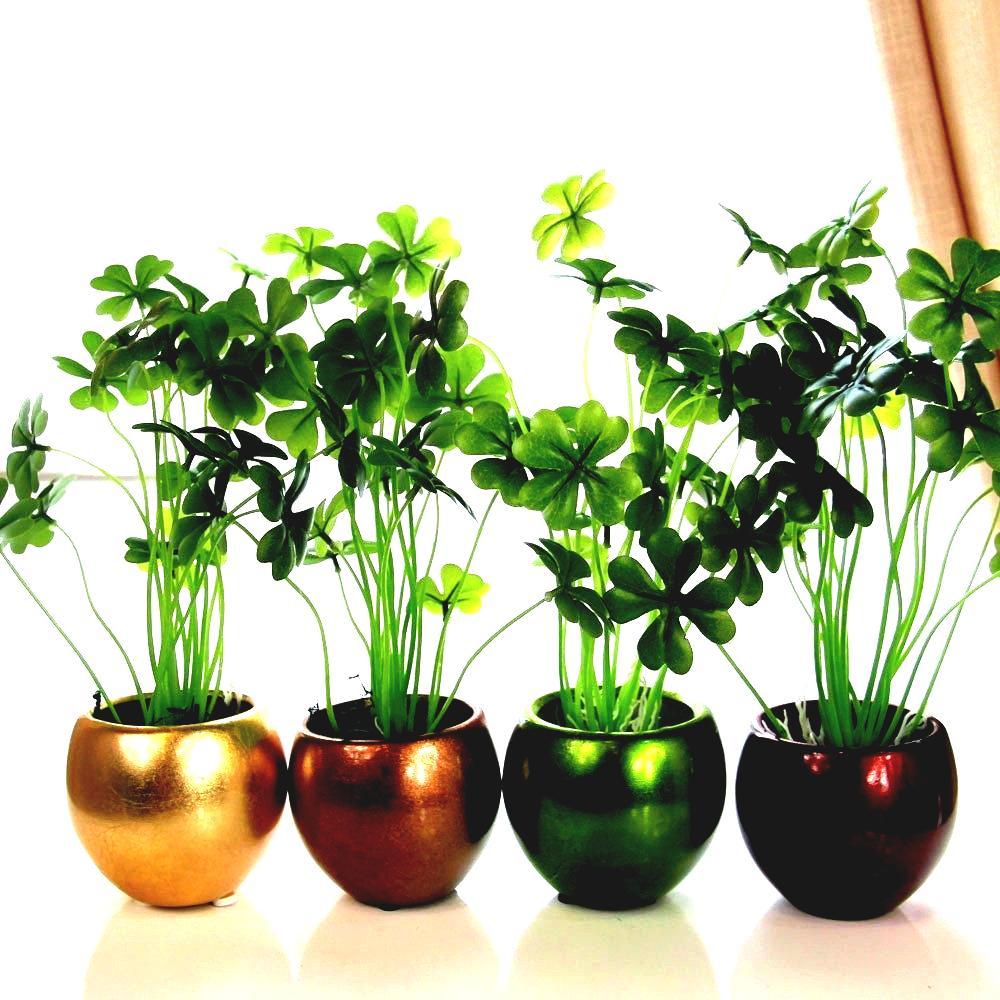 bonsai house plants