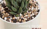 cactus-and-succulent-fertilizer