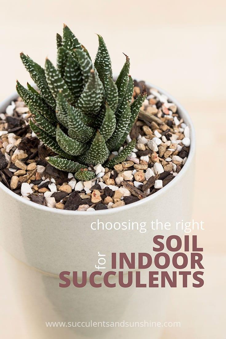 Fertilizer For Succulents Flowers Reviews
