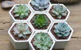 cactus-succulent-plant