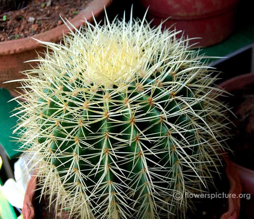 cactus varieties