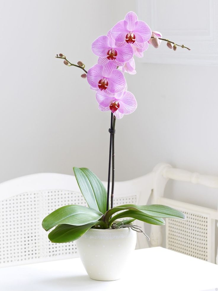 care of indoor orchids