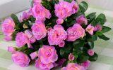 dry-azalea-flowers
