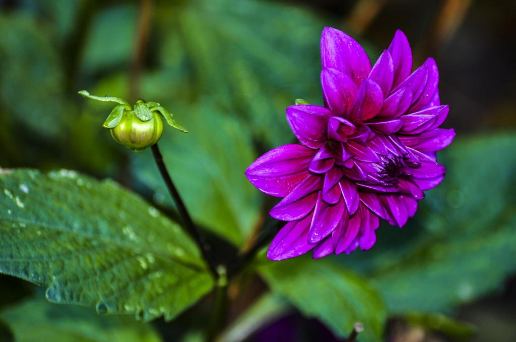 exoctic flower